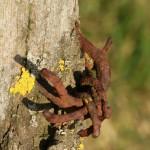 Araignée Rouillée à Laneuvelotte 2011-02-28