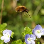 Insecte 2011-03-27 090
