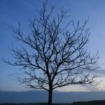 Lindre Basse, Tarquimpol, Gelucourt avec LOANA 2012-01-28 049