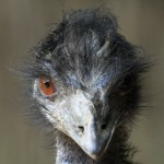 Zoo Amneville Emeu moi  ! 2011-05-16 069