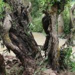 le ruisseau de Voirincourt